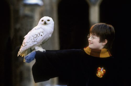 hp1-stills-hd-15.jpg