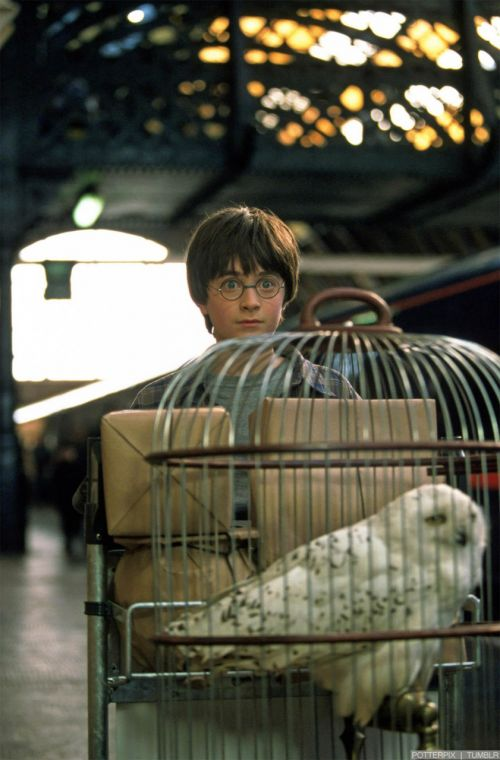 hp1-stills-hd-76.jpg